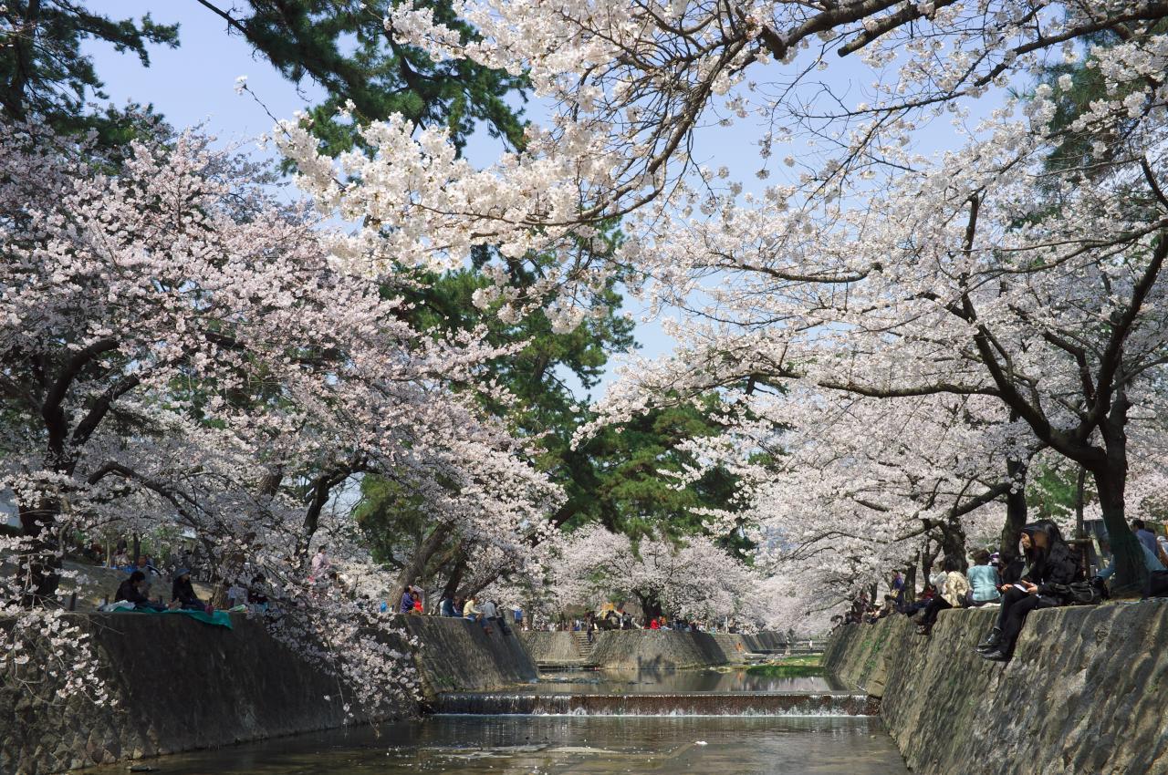 桜を続ける!_b0160331_1650341.jpg