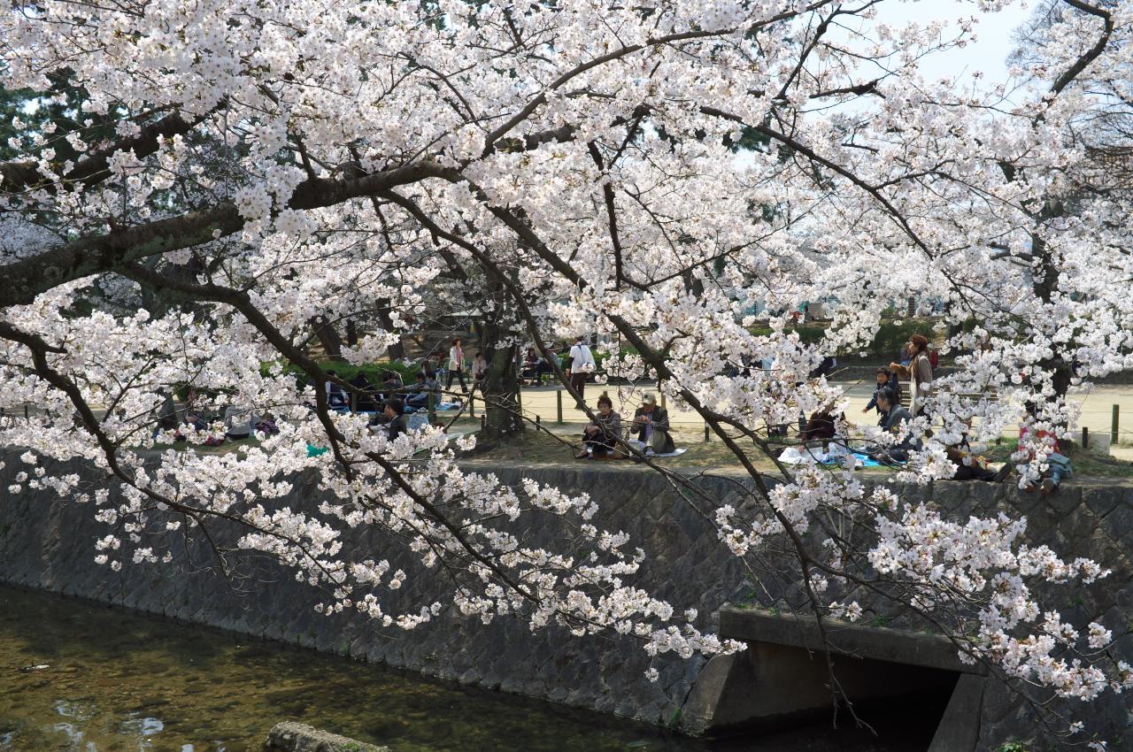 桜を続ける!_b0160331_16514412.jpg