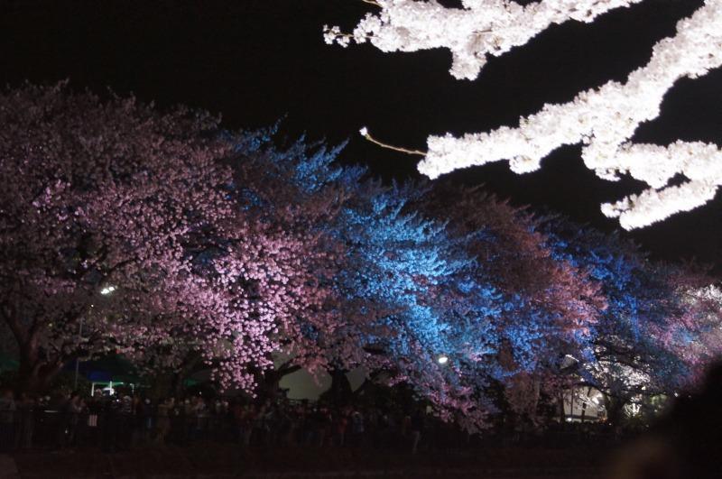 野川の桜☆虹色に輝いて_a0122932_2254632.jpg