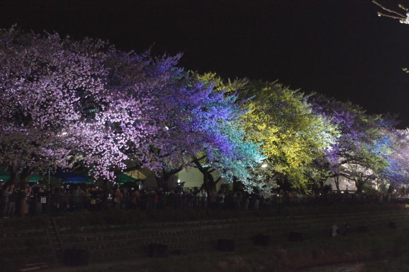 野川の桜☆虹色に輝いて_a0122932_2261036.jpg