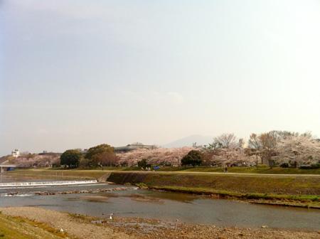 桜。_e0170538_821628.jpg