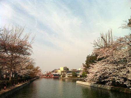 桜。_e0170538_821913.jpg