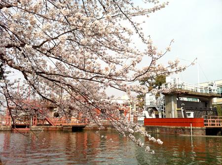 桜。_e0170538_822179.jpg
