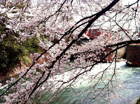 桜。_e0170538_822349.jpg