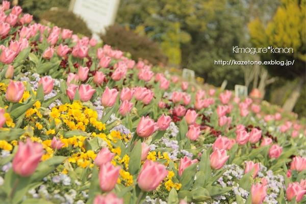 Spring*field~春よ、集まれ~♪_b0197639_19123312.jpg