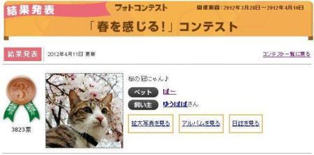 Yahoo!ペット「春を感じる!」コンテスト第3位猫 ぽー編。_a0143140_21393825.jpg