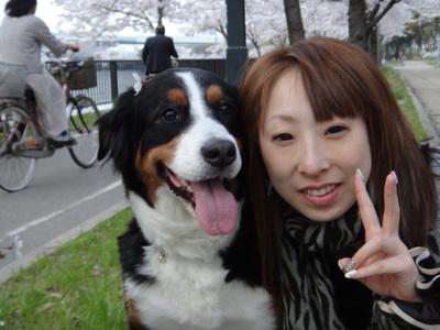 桜は、見るもの愛でるもの_e0270846_215869.jpg