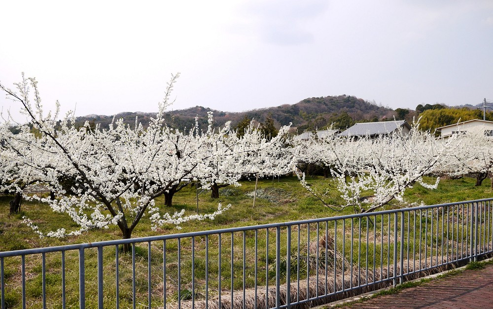 里山の風景_b0093754_22374891.jpg