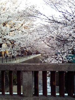 お花見はハムの味_a0108859_0242536.jpg
