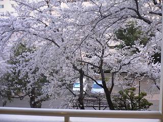 ゆっくりお花見。_d0137764_1058310.jpg