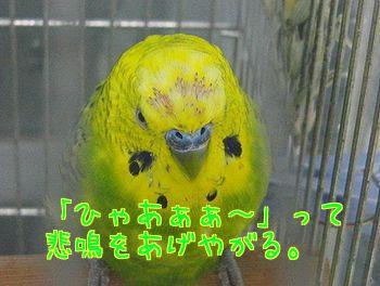 f0196665_0505279.jpg