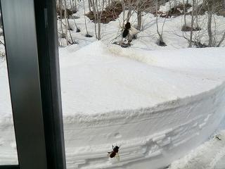 雪ムロ工事再開_d0122374_1646857.jpg