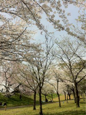 お花見大好き♪_a0132675_11284678.jpg
