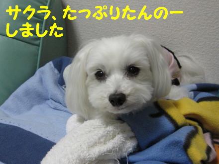 b0193480_1434387.jpg