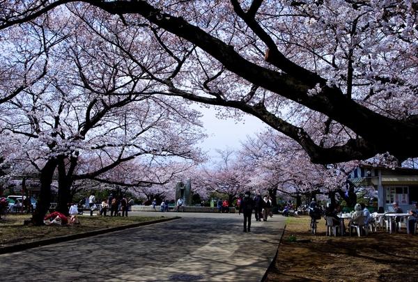 桜_a0248481_084721.jpg