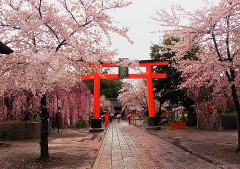 移動日 平野神社でお花見_c0002682_23213415.jpg
