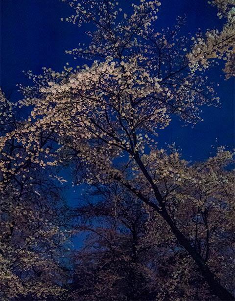 移動日 平野神社でお花見_c0002682_23215930.jpg