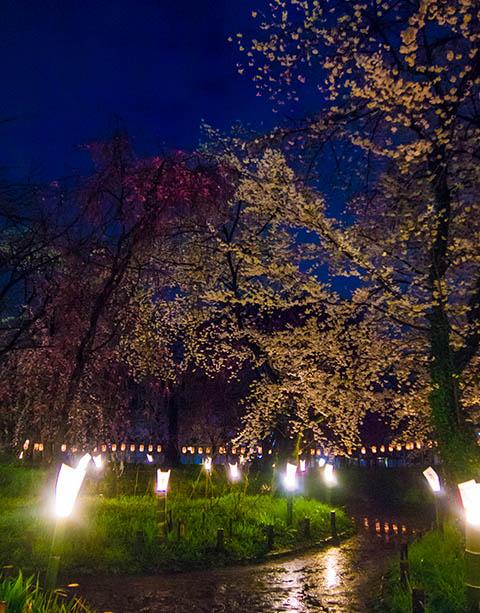 移動日 平野神社でお花見_c0002682_23221634.jpg