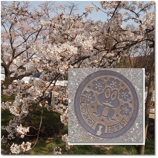 越水浄水場桜~♪_d0078486_1855167.jpg
