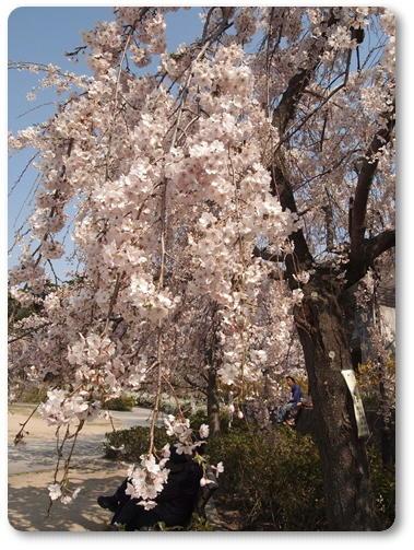 越水浄水場桜~♪_d0078486_741763.jpg