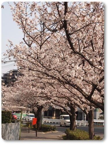 越水浄水場桜~♪_d0078486_7485991.jpg
