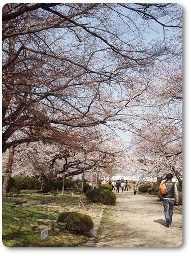越水浄水場桜~♪_d0078486_7495082.jpg
