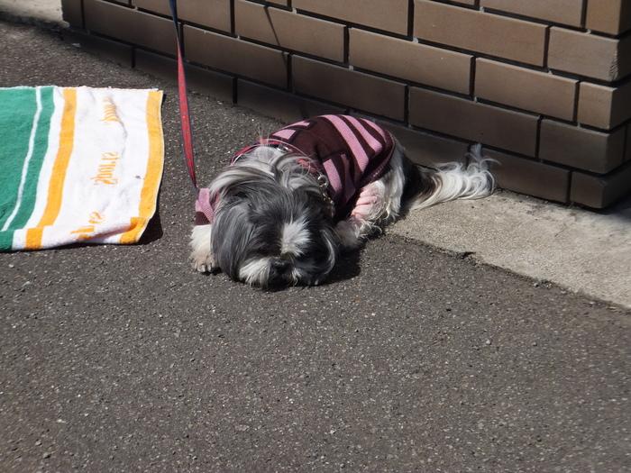 札幌 快晴! 春散歩!_c0226202_16522987.jpg
