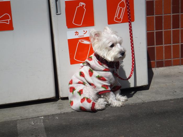 札幌 快晴! 春散歩!_c0226202_16544169.jpg
