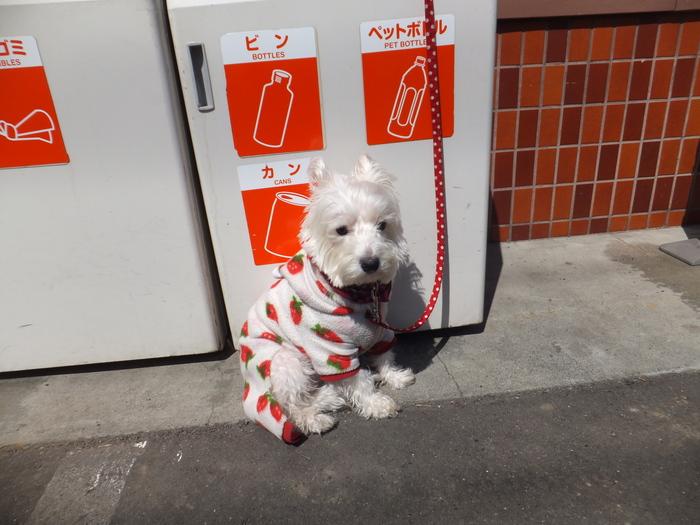 札幌 快晴! 春散歩!_c0226202_1655472.jpg