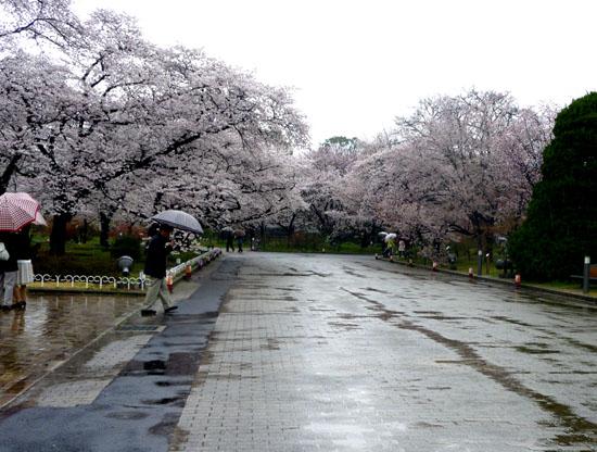 鴨川と植物園 _e0048413_211148.jpg