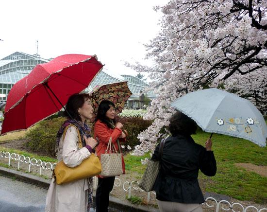 鴨川と植物園 _e0048413_2115125.jpg
