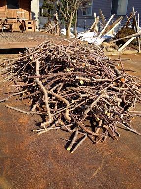 薪集め・・・リンゴの樹_b0150120_15491467.jpg