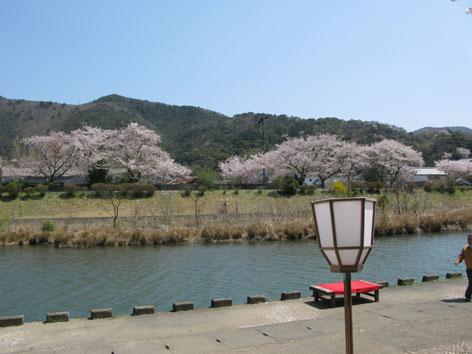 五十鈴川 桜情報 4  _f0129726_2229374.jpg