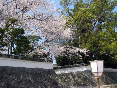 五十鈴川 桜情報 4  _f0129726_22294768.jpg