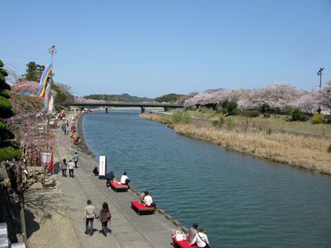 五十鈴川 桜情報 4  _f0129726_22314051.jpg