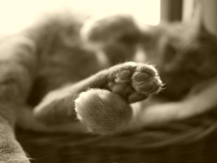 足遊び猫 しぇる編。_a0143140_22104143.jpg
