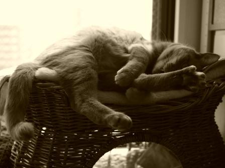足遊び猫 しぇる編。_a0143140_22135716.jpg
