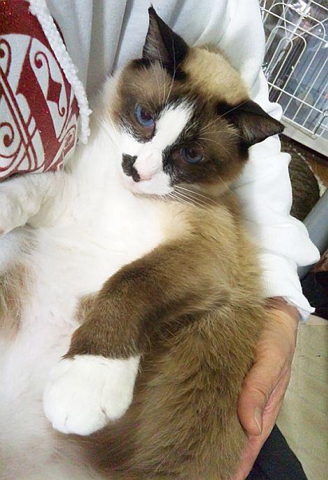 ライバル登場!? smile catのNewフェイス♪_b0024945_10485280.jpg