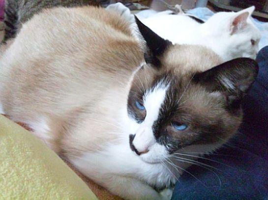 ライバル登場!? smile catのNewフェイス♪_b0024945_11114161.jpg