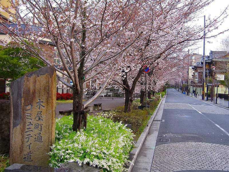 毎年楽しみな、「木屋町通り」の桜便り_e0237645_1621954.jpg