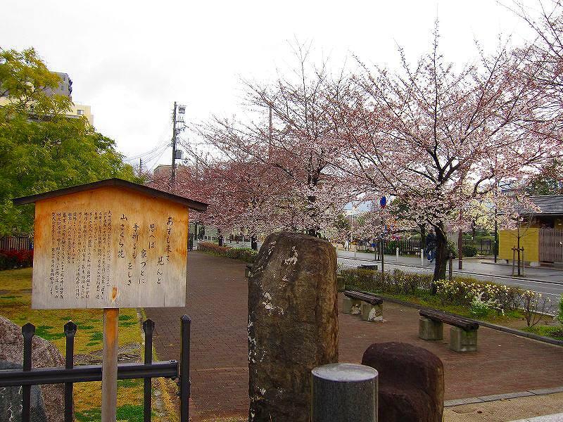 毎年楽しみな、「木屋町通り」の桜便り_e0237645_1623981.jpg