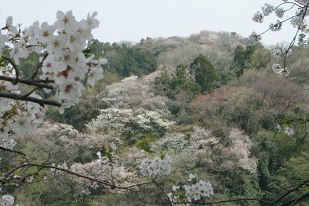 鎌倉の山並_c0126647_10161828.jpg