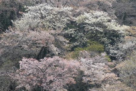 鎌倉の山並_c0126647_9524554.jpg