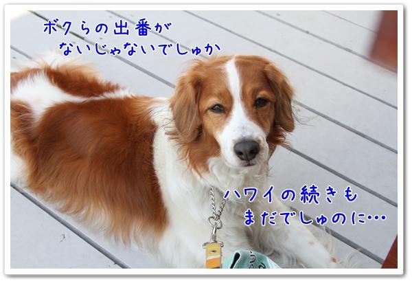d0013149_21511230.jpg