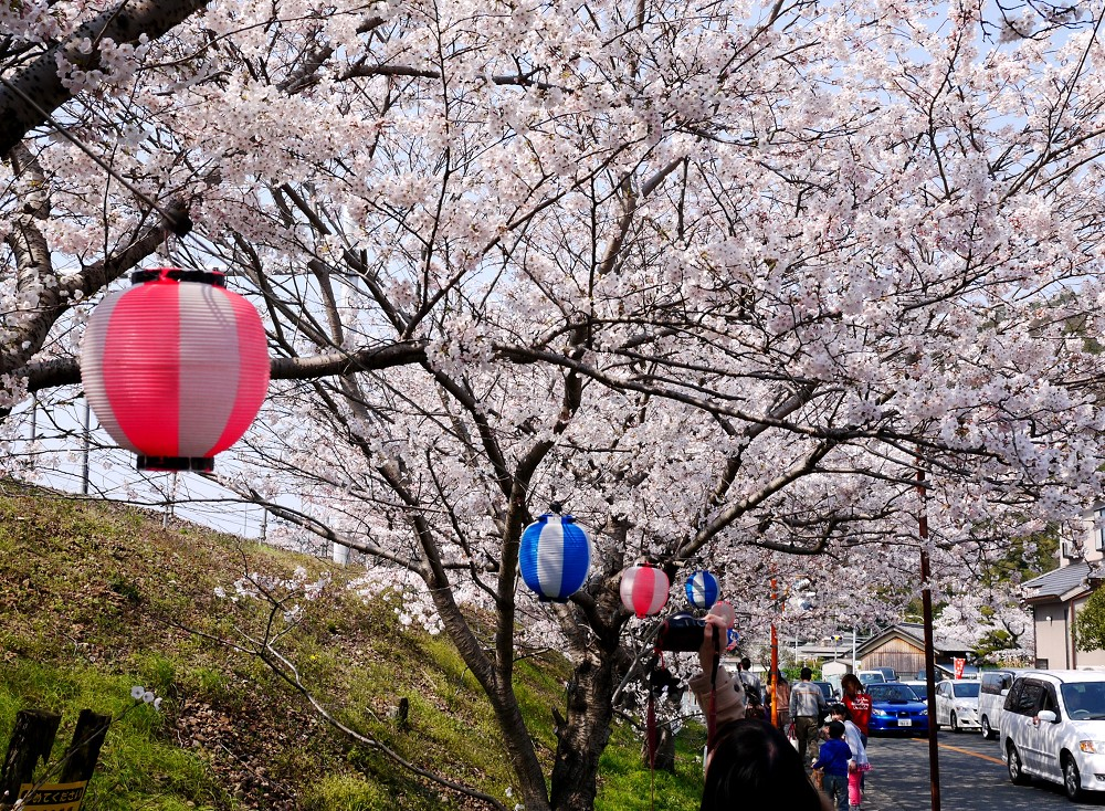 花のある風景_b0093754_22334199.jpg