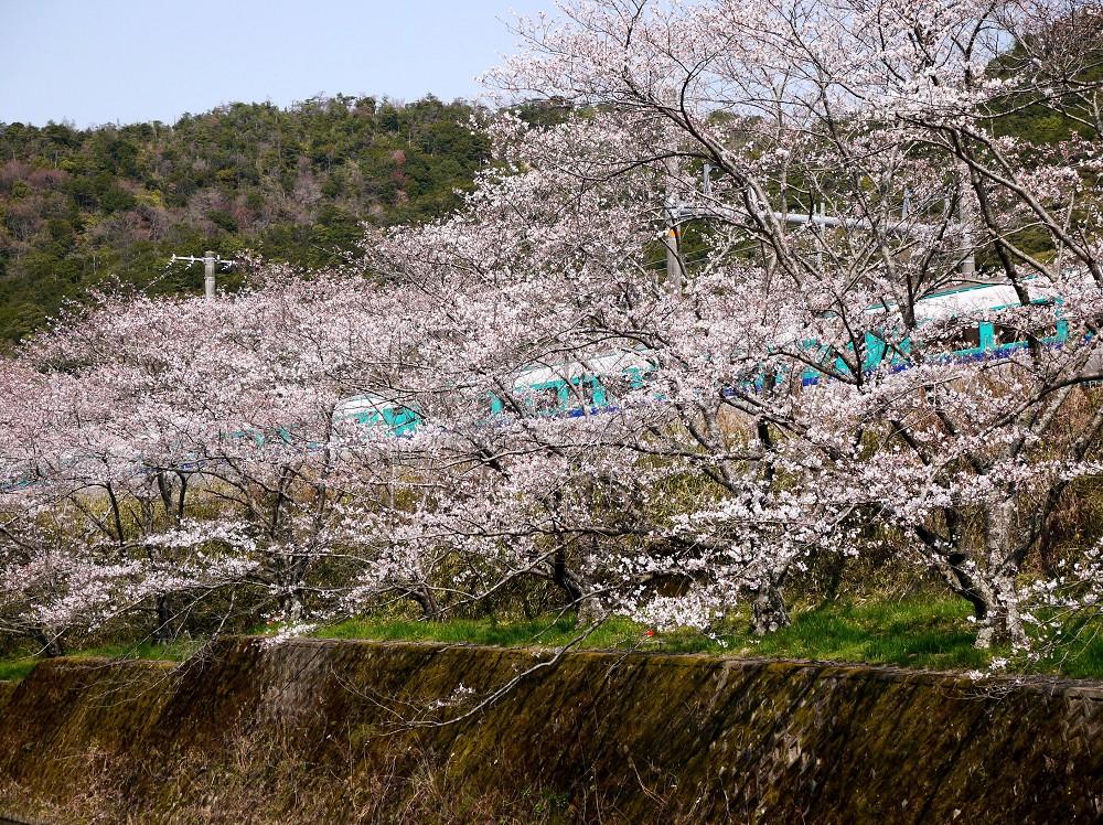 花のある風景_b0093754_22344181.jpg