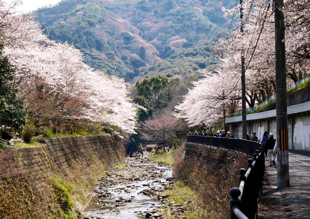花のある風景_b0093754_2234547.jpg