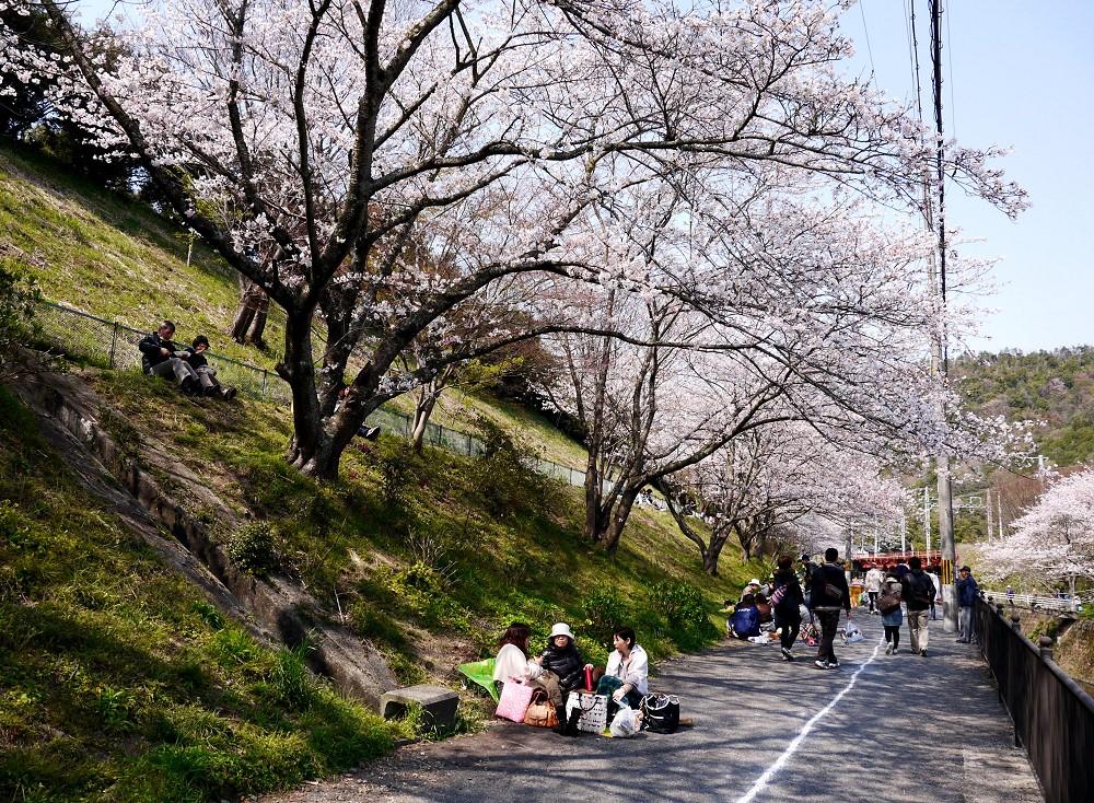 花のある風景_b0093754_2235769.jpg