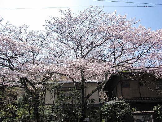 4月12日桜実況中継_c0078659_15413036.jpg