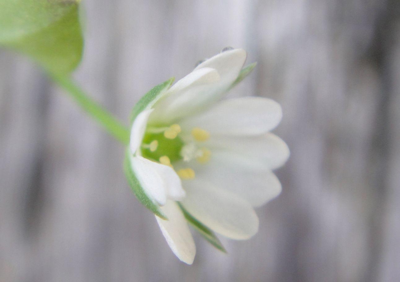 H24年4月度植物調査_c0108460_2121297.jpg